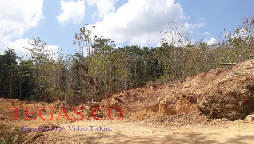 Pemda Mubar Terindikasi Membiarkan Perusakan Hutan di Napano Kusambi