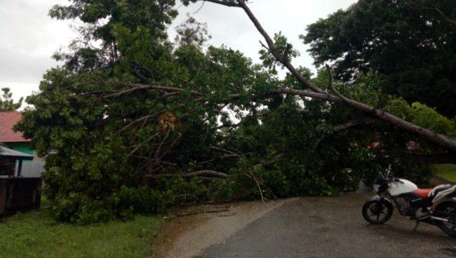 Pohon Tumbang Menutup Akses Jalan Akibat Angin Kencang