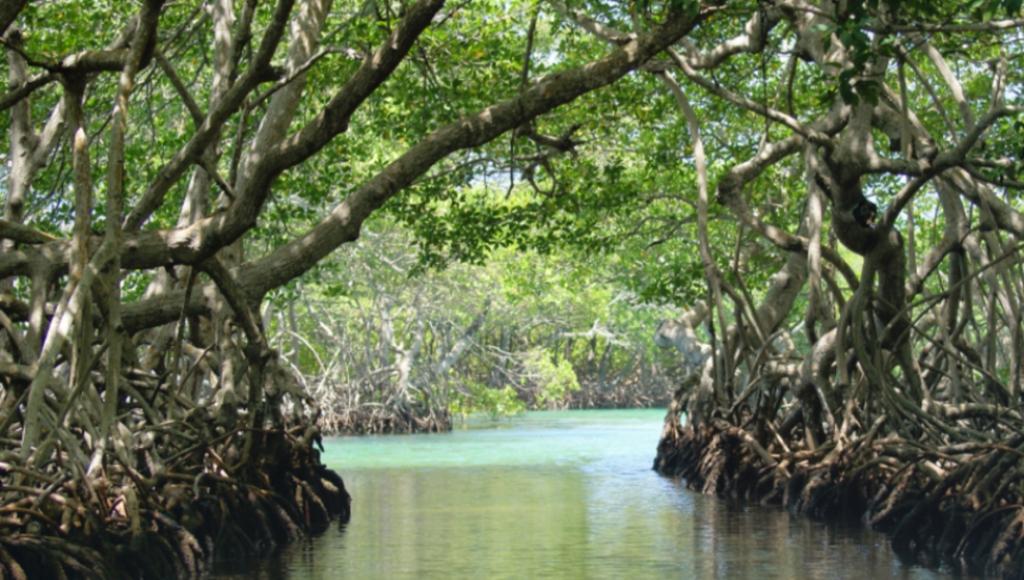 Wisata Mangrove Purirano, Akan Diresmikan Walikota Kendari, Asrun
