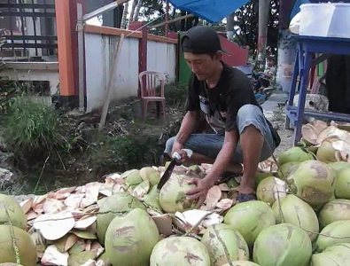 Penjula kelapa Muda di kabupaten kolaka raup keuntungan di bulan suci ramadhan ini. FOTO : ASDAR LANTORO