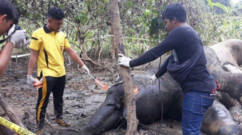 Warga Temukan Gajah Mati Di Aceh Timur
