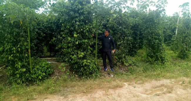 DPRD Konsel Gelar KAD di Bangka Tengah Terkait Lada dan Karet