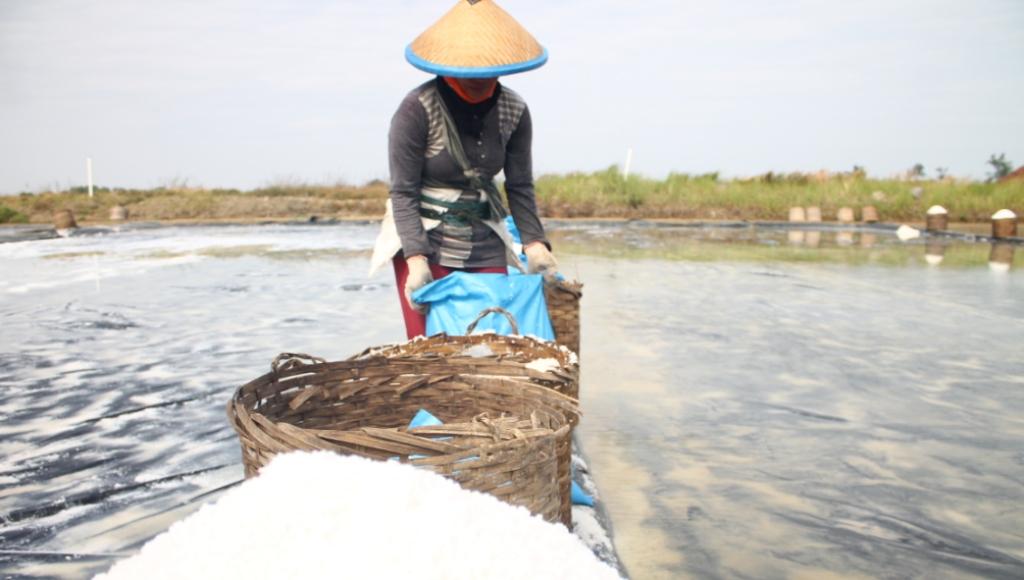 Petani Garam di Jepara Sudah Mulai Panen