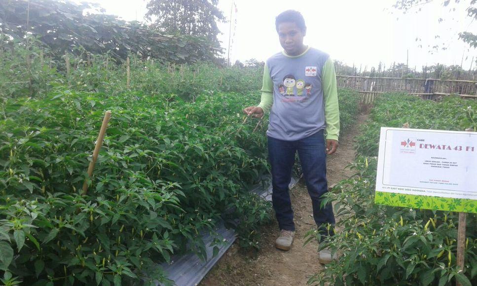 Imran Moita, pemilik lahan perekbunan holtikultura, di Desa Tokowuta Kecamatan Wawolesea. FOTO : FA
