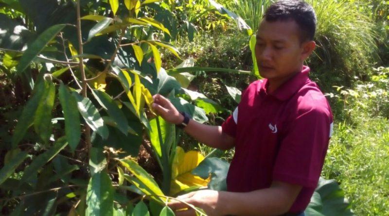 Sisi Lain Kopral Satu Edi Sulton : Hobby Berkebun Dan Berburu Durian