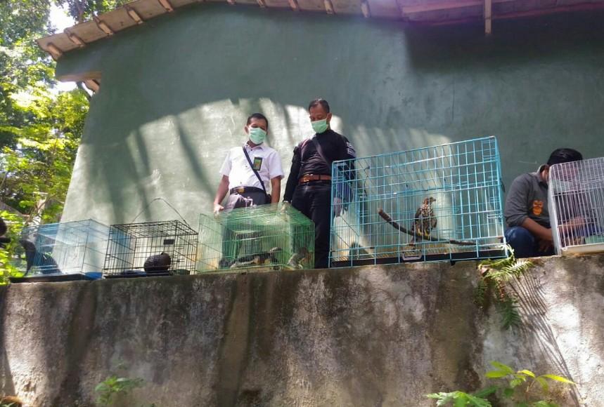 Satwa Liar yang dilindungi yang berhasil diamankan dari pemburu satwa. FOTO : NADHIR ATTAMIMI