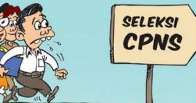 Usulan Kuota CPNSD Wakatobi Sebanyak 540, Tunggu Hasilnya Juni
