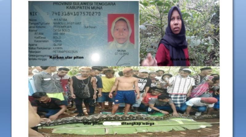 Ritual Tolak Bala Korban Ular Piton di Muna, Menunggu Orang Tua Kampung Berkumpul