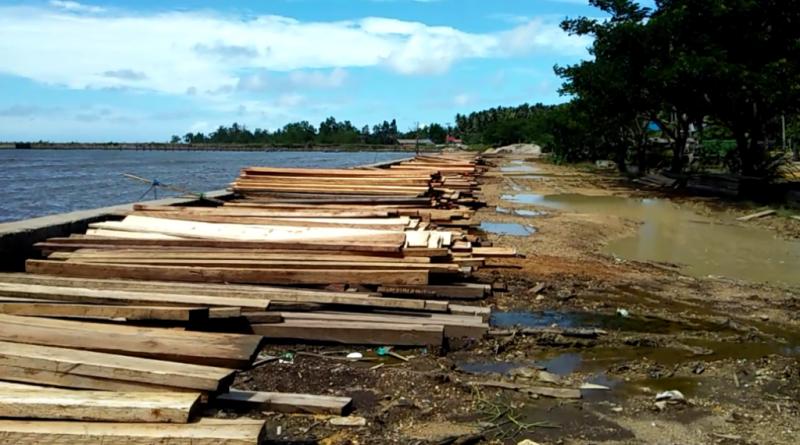 Polhut Butur Diduga Lakukan Pembiaran Aktifitas Ilegal Loging