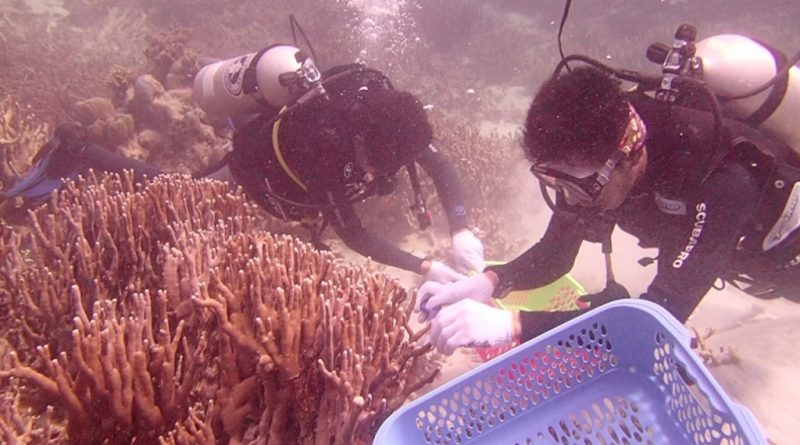 Kolaka Diving Club Transplantasi Karang di Pulau Lemo Kolaka