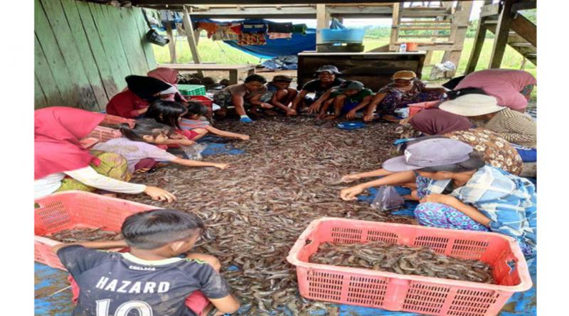Butur Pecahan Muna Produsen Terbesar Udang, Lokasi Terletak di Tri Wacu-wacu