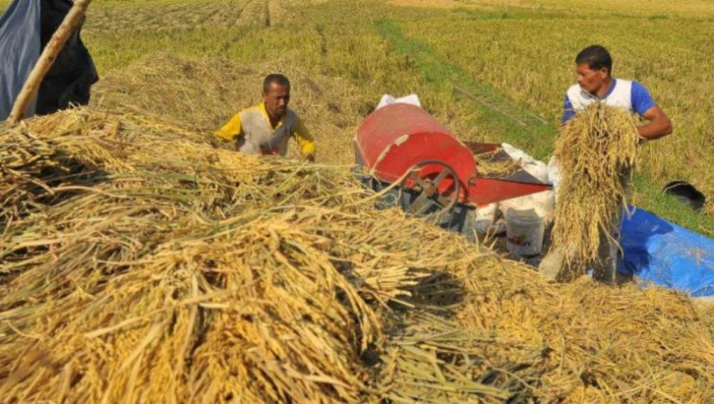 DPRD Konawe Tetapkan Harga Gabah Rp 4. 070 per Kilogram